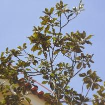 ÁrvoresESSb (45)